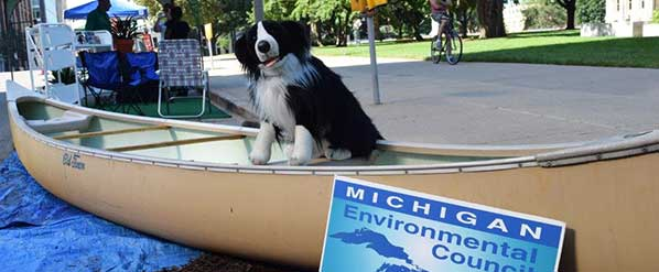 dog-in-canoe